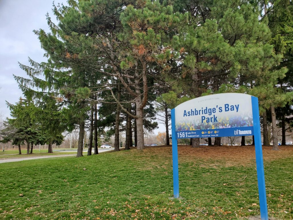 auto glass repair in woodbine beach the beaches